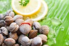 De Kokkels vers oceaan gastronomisch diner van schaaldierenzeevruchten met citroen en ijs op banaanblad - ruwe bloedkokkel stock fotografie