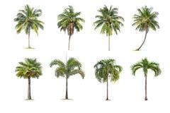 De kokosnoot en de palmen isoleerden boom op witte achtergrond, de inzameling van bomen De grote bomen groeien in de zomer stock afbeelding
