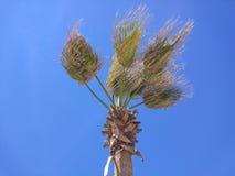 De kokosnoot meer palmier op het strand royalty-vrije stock foto's