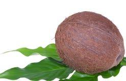 De kokosnoot op de palm doorbladert stock afbeeldingen