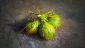 De kokosnoot van Bali Stock Foto