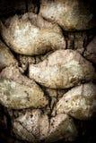 De kokosnoot van de bractee Royalty-vrije Stock Foto