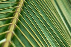 De kokosnoot verlaat patroon dichte omhooggaand Stock Fotografie