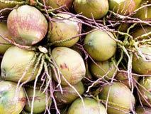 De kokosnoten Stock Afbeeldingen
