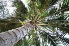 De kokospalm kijkt mierenmening Stock Foto's