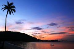 De kokospalm van het silhouet Stock Afbeeldingen