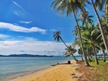 De kokospalmen behoren tot het strand stock foto