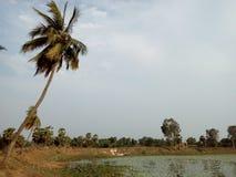 De Kokospalmen op de Bank van het Meer Stock Foto