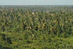 De Kokospalmen in Thailand Royalty-vrije Stock Afbeelding