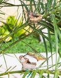De kolibrie die van de moeder haar jongelui voedt stock foto's