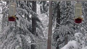 De kolibrie eet uit voeder in een sneeuwonweer stock video