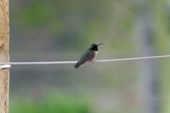 De kolibrie streek online neer Royalty-vrije Stock Foto