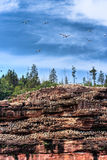 De Kolonie van de vogel royalty-vrije stock fotografie