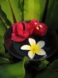 De Kom van Aromatherapy Stock Afbeeldingen