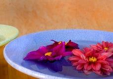 De Kommen van de dahlia Royalty-vrije Stock Fotografie