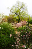 De komst van de lente Stock Afbeelding
