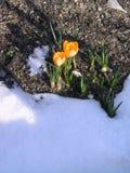 De komst van de lente stock foto's