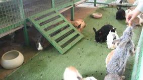 De konijnen ontspannen en eten voedsel in kooi bij dierlijk landbouwbedrijf in Saraburi, Thailand stock videobeelden
