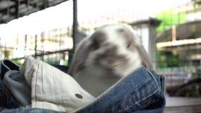 De konijnen zijn beet het spelen jeans stock video