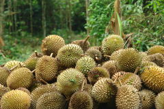 De koning van Vruchten - Durian Stock Afbeelding