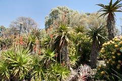 De koningen parkeren - Perth - Australië stock fotografie