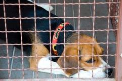 De kooi van de hond Stock Foto