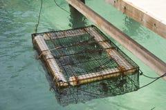 De Kooi van de zeekreeft Stock Foto