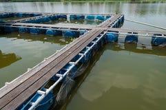 De kooi van zoet watervissen in rivier Stock Foto's
