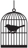De kooien van de vogel Stock Foto
