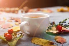 De kop thee van de de herfstsamenstelling De herfstbladeren op donkere achtergrond Stock Afbeelding