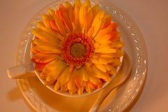 De kop van de koffie met bloem binnen 7 royalty-vrije stock foto