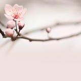 De kopbal van de lente met exemplaarruimte. Royalty-vrije Stock Afbeeldingen