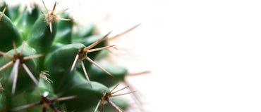 De kopbalachtergrond van de cactus stock foto's