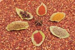 De koppen van het de bloemlaurierblad van het kruid Stock Afbeeldingen