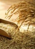 De korrel van de rijst Stock Afbeeldingen