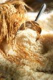 De Korrel van de rijst Royalty-vrije Stock Afbeeldingen
