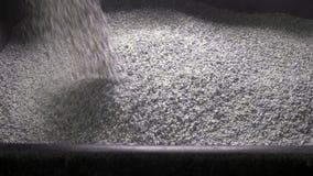 De korrelige cementkruimel giet (het vullen van het het toiletdienblad van een kat), langzame motie stock video