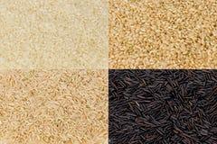 De Korrels van de rijst Royalty-vrije Stock Afbeeldingen