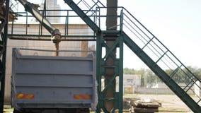 De korrels van tarwe worden geladen in een vrachtwagen, Installatie van broodproducten, onderneming van malen en de voerindustrie stock videobeelden