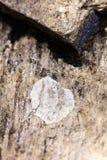 De korstmossen op rots macro extreme achtergrond zuiveren kunst in hoogte - producten 50,6 van kwaliteitsdrukken Megapixels royalty-vrije stock foto's