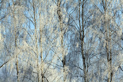 De koude sneeuw van het de winter boslandschap Stock Foto