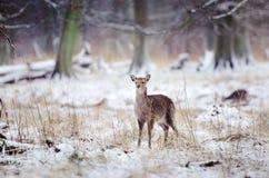 De koude winter Stock Foto's