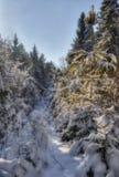 De koude winter met bont-bomen Royalty-vrije Stock Afbeeldingen