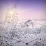 De koude winter morning_2 Stock Foto's