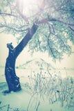 De koude winter morning_4 Stock Fotografie