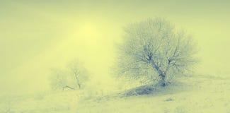 De koude winter morning_1 Royalty-vrije Stock Foto
