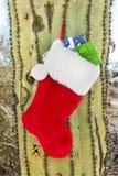 De kous van Kerstmis op cactus Stock Fotografie