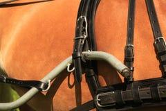 De kraag van het paard - close-up. Stock Afbeeldingen