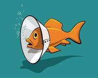 De kraag van vissen Stock Foto