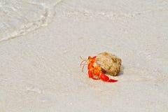 De krab die van de kluizenaar naar het overzees loopt Stock Foto's